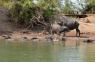 Tierbadeanstalt am Mekong